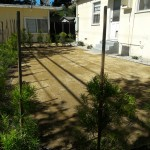 Drought tolerant yard convert your yard to good soil with no grass.