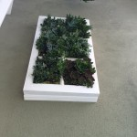 succulent living walls for homes and offices